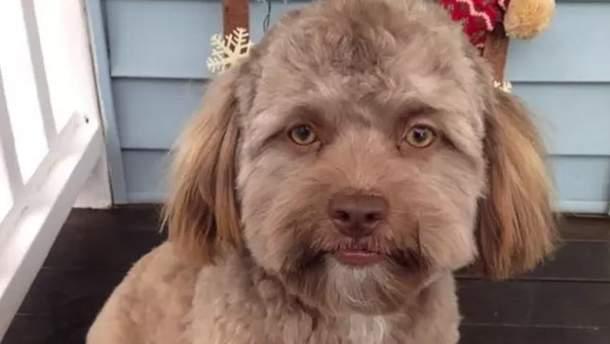 """Собака Йоджи с """"человеческим"""" лицом взорвала сети"""