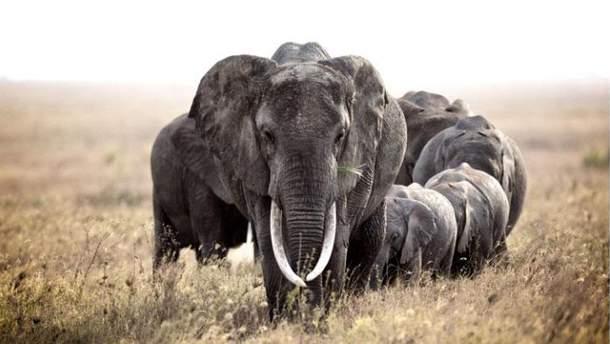 Глобальное вымирание животных в мире