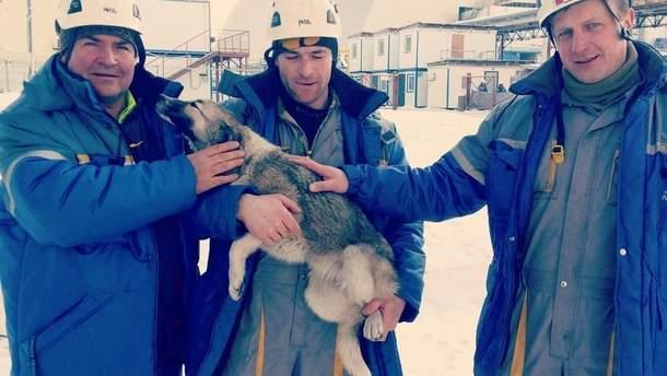 Работники со спасенной собакой