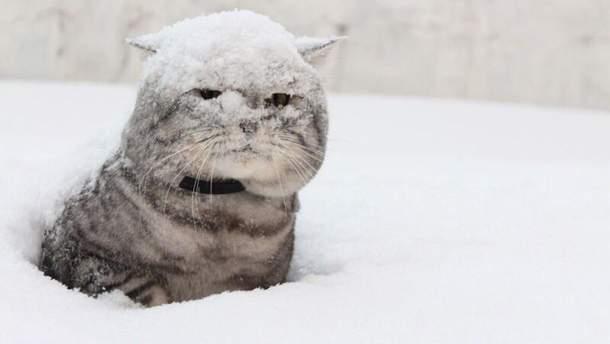 Погода 21 березня в Україні буде дуже сніжною