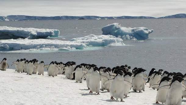 В Антарктиду вирушить 2 українські експедиції