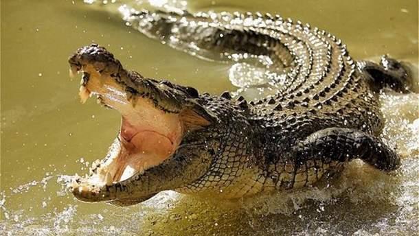1 апреля ГПСУ разыграла украинский новостью о крокодилах