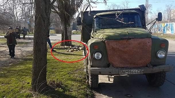 Догхантери отруїли собак у Бердянську