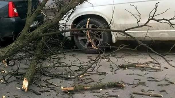 У центрі Києва гілки зі старого дерева пошкодили авто