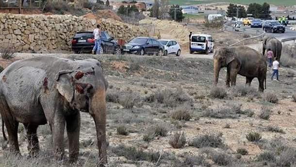 В Іспанії у ДТП потрапила вантажівка зі слонами