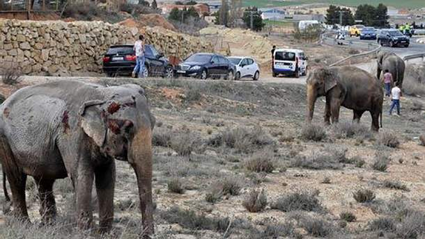 В Испании в ДТП попал грузовик со слонами