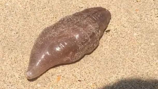 Странное существо вынесло на берег в Таиланде