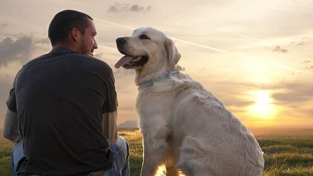 Собаки различают человеческие эмоции