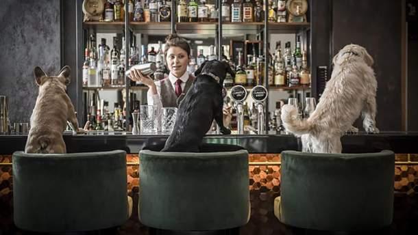 В баре готовят коктейли для собак