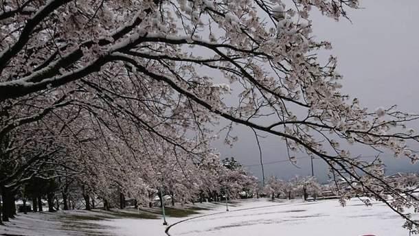 Снег в Японии