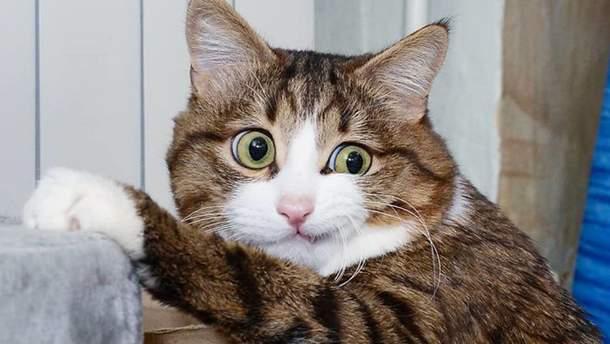 Кошка Рекси