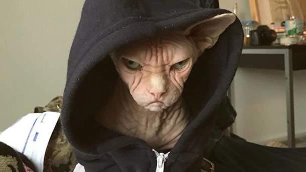 Кіт Локі
