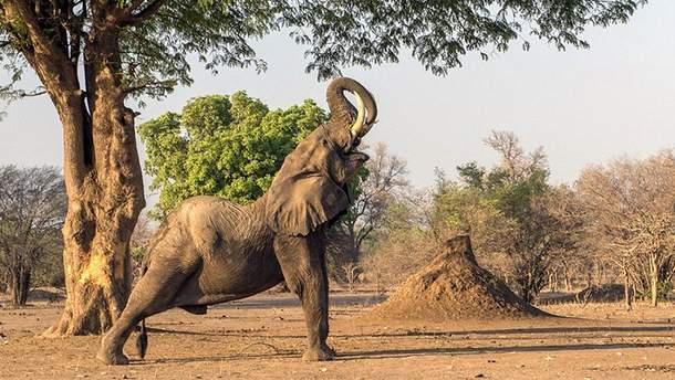 Слон занялся йогой посреди дороги