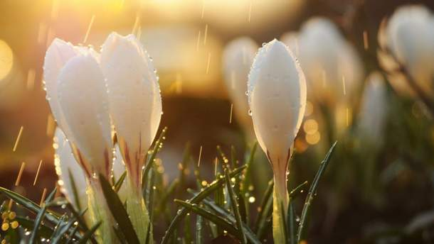 Прогноз погоди на 18 квітня: Україну очікують похолодання та дощі