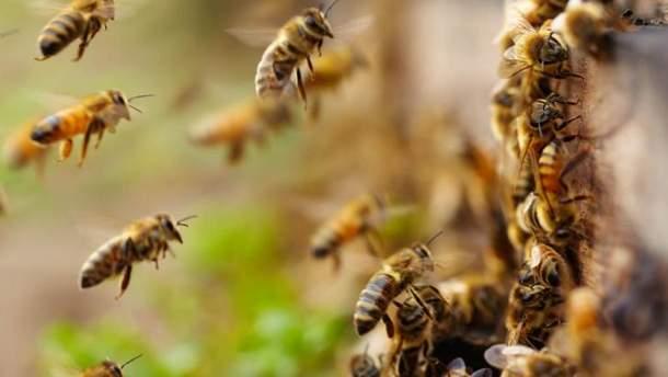 Пчелы сорвали рейс самолета из России в оккупированный Крым