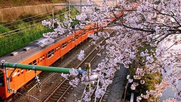 Укрзализныця ввела дополнительные поезда до Ужгорода в период цветения сакур