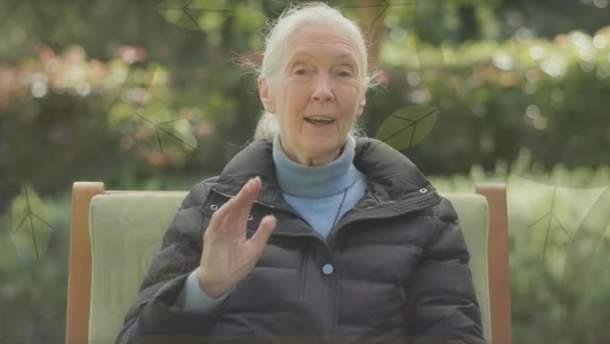 Новый дудл от Google: кто такая Джейн Гудолл