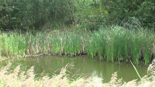Девочка утонула в пруду на Житомирщине