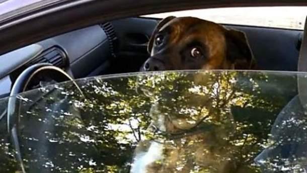 В Китае собака протаранила витрину магазина