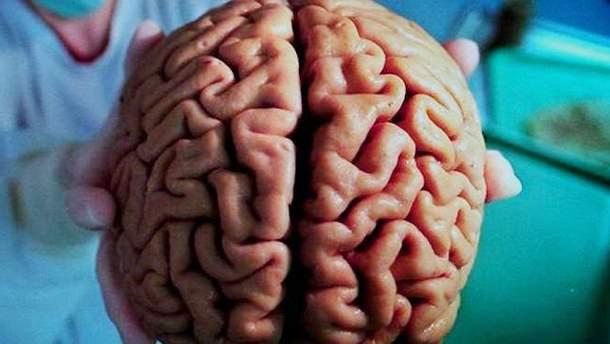Життя мозку поза тілом