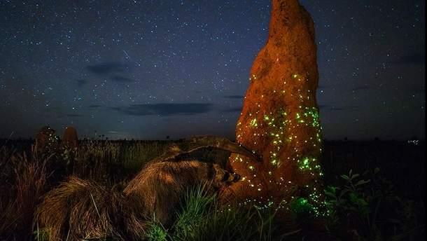 Фото, которое победило в конкурсе Wildlife Photographer-2017