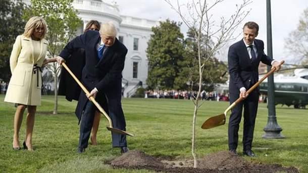 Дуб, який Трамп з Макроном садили біля Білого дому забрали на карантин