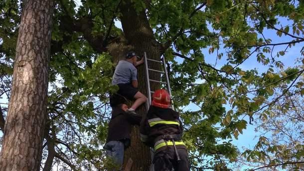 В Ровенской области мужчина хотел спасти кота, но застрял на дереве