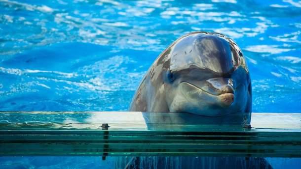 Дельфінарії
