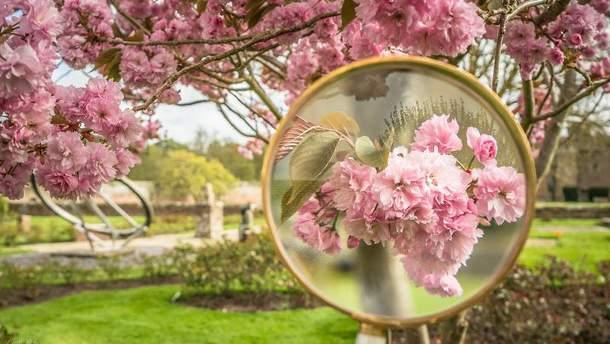 Фото квітів крізь збільшувальне скло