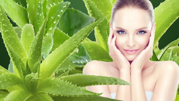 Как использовать алоэ для красоты лица и волос