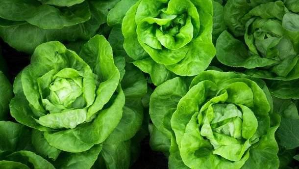 Вагомі аргументи для здоров'я вживати зелень щодня