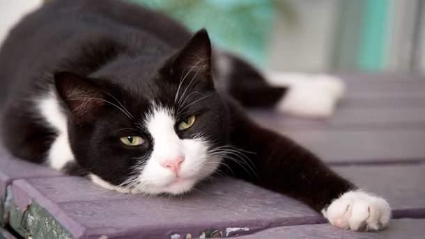 В Італії живе кіт-мільйонер
