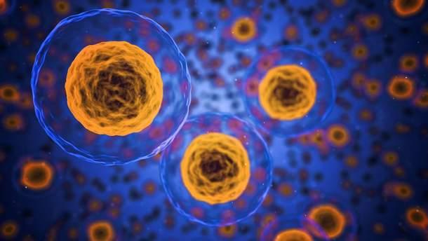 Вчені зробили неочікувану заяву щодо клітин мозку