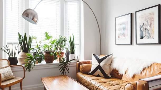 4 комнатных растения, которые очищают душный воздух летом