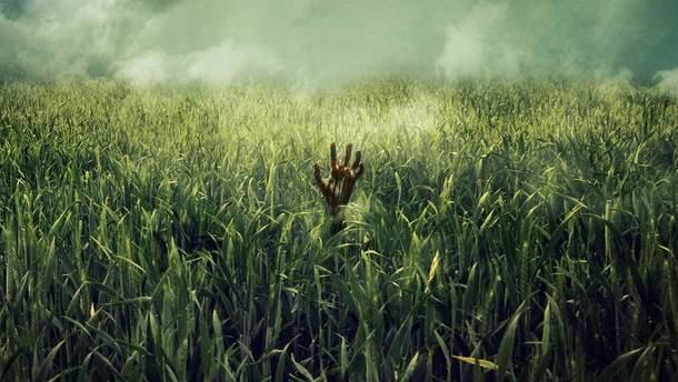 """""""У високій траві"""": Netflix взялись за екранізацію книги Стівена Кінга"""