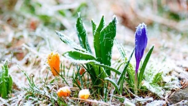 В Україну йдуть заморозки