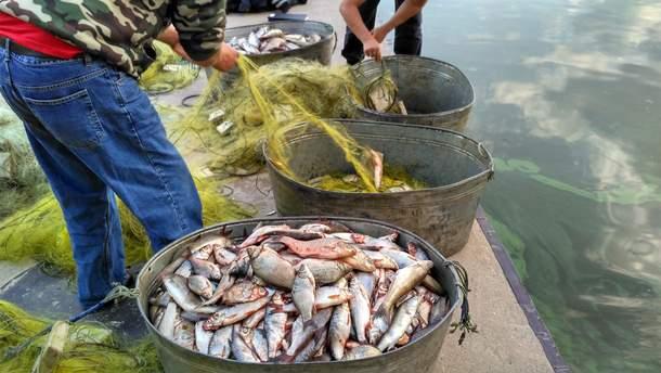 ВЗапорожье браконьеры наловили рыбы на4 млн. грн