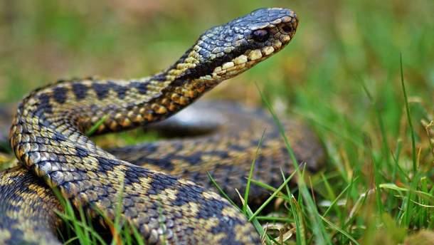 Що робити при укусі змії