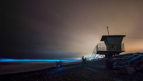 В Калифорнии светится океан