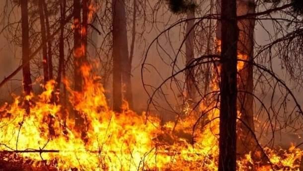 У Росії горить понад 60 тисяч гектарів лісу, рятувальники не справляються
