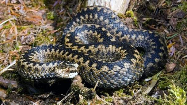 Как избежать укусов змей