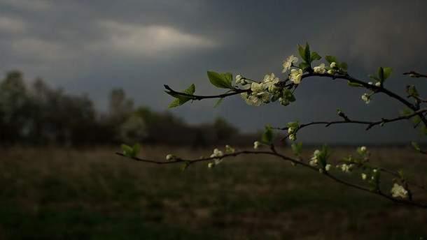 Прогноз погоды в Украине на вторник 15 мая