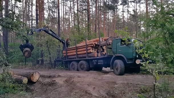 На Закарпатье чиновники незаконно вырубали лес и брали взятки