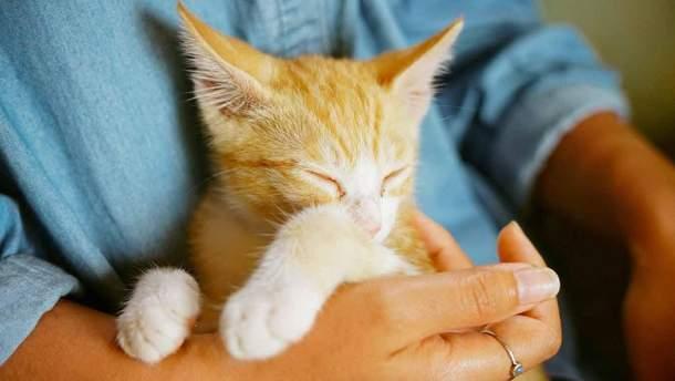 Чи можуть коти лікувати людей