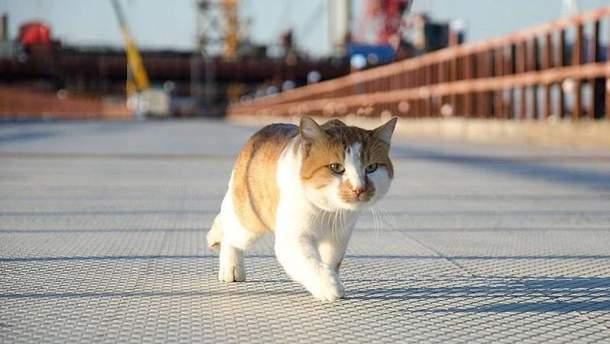 Кот Мостик опередил Путина в открытии Крымского моста