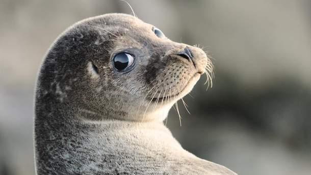 Тюлени помогли ученым измерить температуру вод в Антарктиде