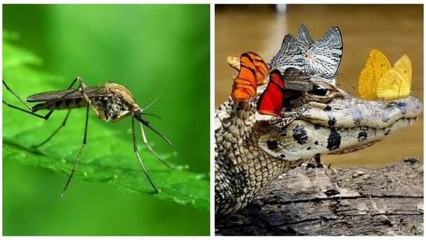 Чому комарі небезпечніші за крокодилів