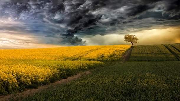 Прогноз погоди в Україні на середу, 23 травня: дощі з грозами очікуються на заході та сході, на решті території – тепло та сонячно
