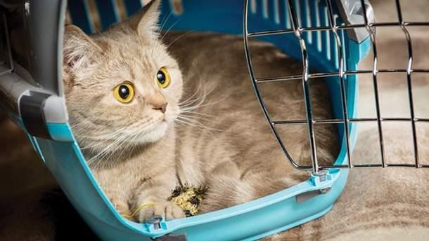 С 1 июня в Украине меняют правила перевозки домашних животных за пределы страны