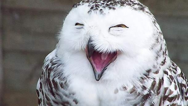 Чому у птахів немає зубів